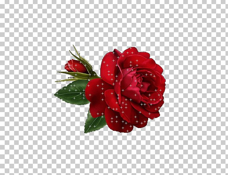 Rose Flower Red PNG, Clipart, Clip Art, Color, Cut Flowers, Floral Design, Floristry Free PNG Download