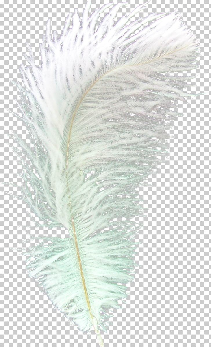 Feather Asiatic Peafowl Bird PNG, Clipart, Animal, Animals, Asiatic, Asiatic Peafowl, Bird Free PNG Download