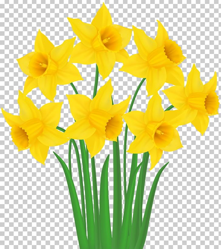 Daffodil PNG, Clipart, Amaryllis Family, Clipart, Cut Flowers, Daffodil, Daffodils Free PNG Download