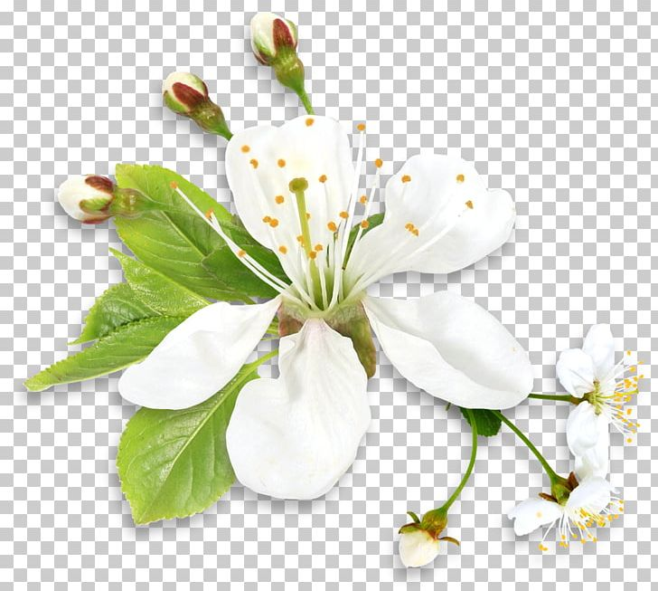 Sympathy Family Condolences Friendship Love PNG, Clipart, Blossom, Branch, Cherry Blossom, Clipart, Common Daisy Free PNG Download