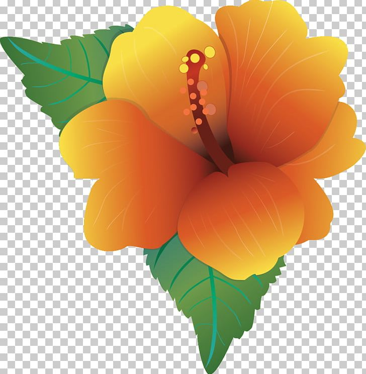 Hawaiian Hibiscus Flower Png Clipart Color Drawing Flower