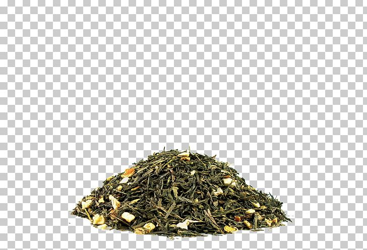 Green Tea Hōjicha Nilgiri Tea Earl Grey Tea PNG, Clipart,  Free PNG Download