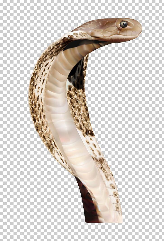 Snake Png Free Download - Snake Clip Art, Transparent Png , Transparent Png  Image - PNGitem