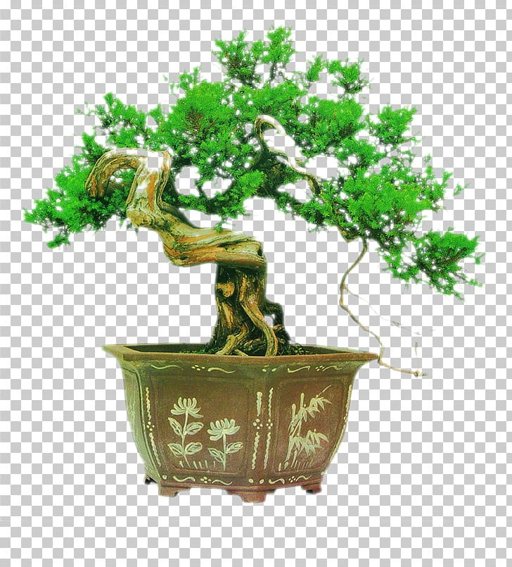 Bonsai Tree Chinese Garden Podocarpus Macrophyllus Png Clipart Christmas Tree Coconut Tree Cutting Decoration Family Tree