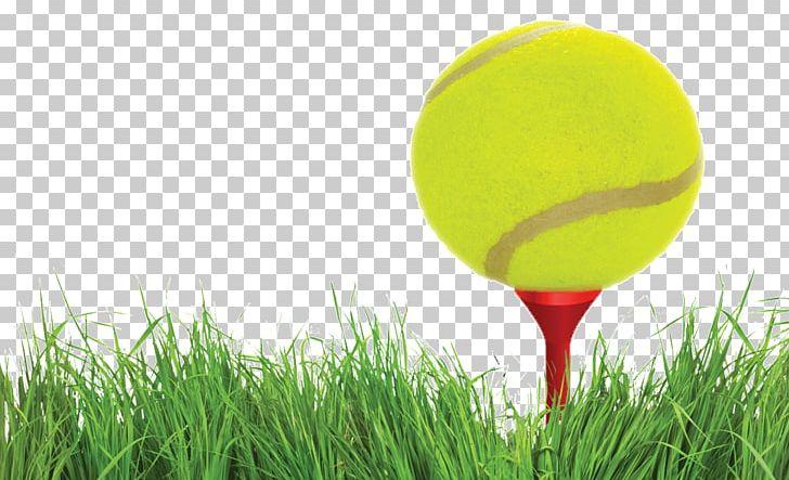 Golf Balls Tennis Balls PNG, Clipart, Ball, Cricket Ball