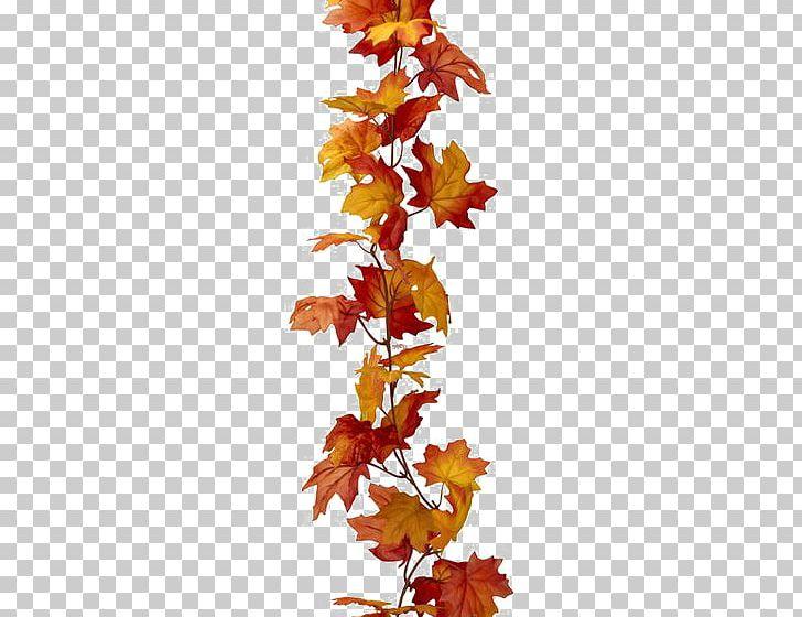 Maple Leaf Autumn Leaf Color PNG, Clipart, Autumn, Autumn Leaf Color, Branch, Color, Color Red Free PNG Download