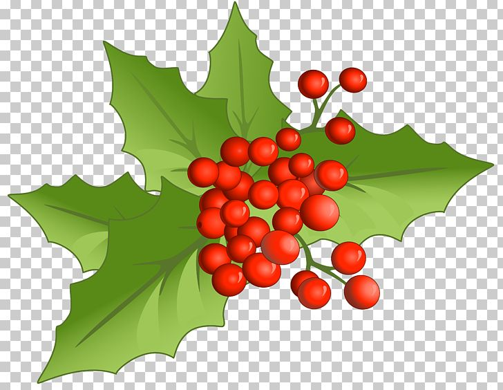 Christmas Clipart Holly.Holly Aquifoliales Natural Foods Fruit Christmas Png