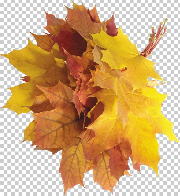 Autumn Leaf Color Autumn Leaf Color PNG, Clipart, Autumn, Autumn Leaf Color, Autumn Leaves, Autumn Png Leaves, Clipping Path Free PNG Download
