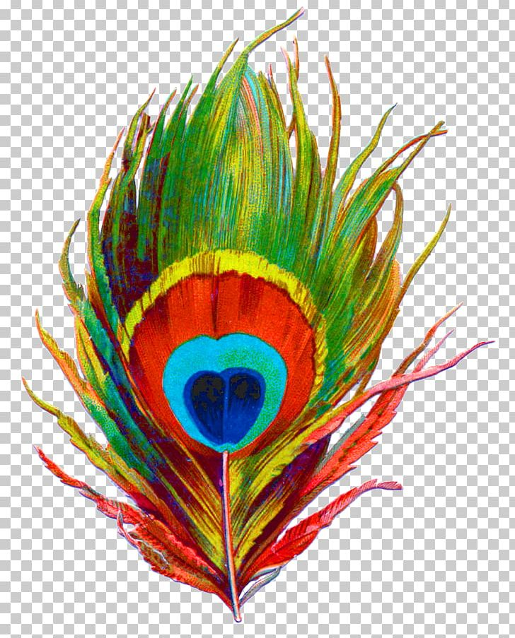 Krishna Bird Feather Peafowl PNG, Clipart, Animals, Art, Beak, Bird, Clip Art Free PNG Download