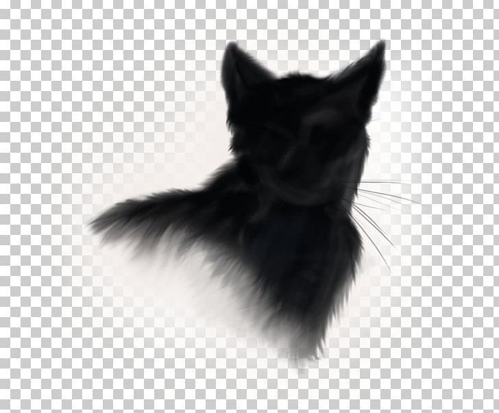Black Line Background png download - 512*512 - Free Transparent Norwegian Forest  Cat png Download. - CleanPNG / KissPNG