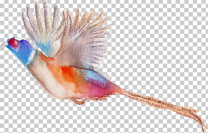 Bird Flamingos Watercolor Painting PNG, Clipart, Animal, Animals, Beak, Bird, Birds Free PNG Download