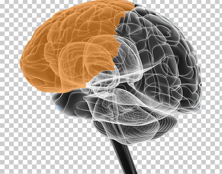 BRAIN Initiative Neuroscience Cerebral Atrophy Neuron PNG, Clipart, Basal Ganglia, Brain, Brain Initiative, Brain Size, Central Nervous System Free PNG Download