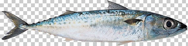 Thunnus Mackerel Sardine Fish Products Oily Fish PNG, Clipart, Anchovy, Bonito, Bony Fish, Fish, Fish Products Free PNG Download