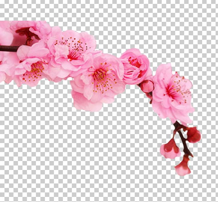 Avon Products Cosmetics Cherry Blossom Perfume Shampoo PNG, Clipart, 2016, 2017, Azalea, Beauty, Blossom Free PNG Download