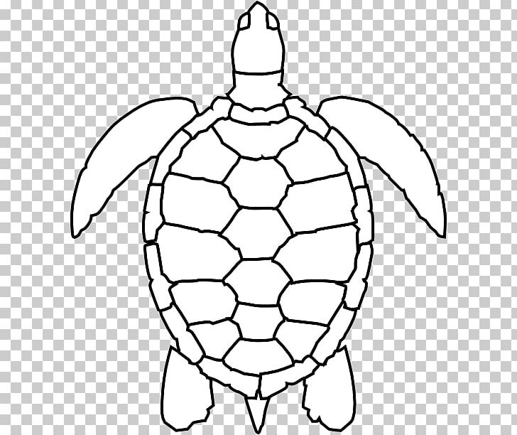 Green Sea Turtle Drawing Png Clipart Animals Area Ball Black