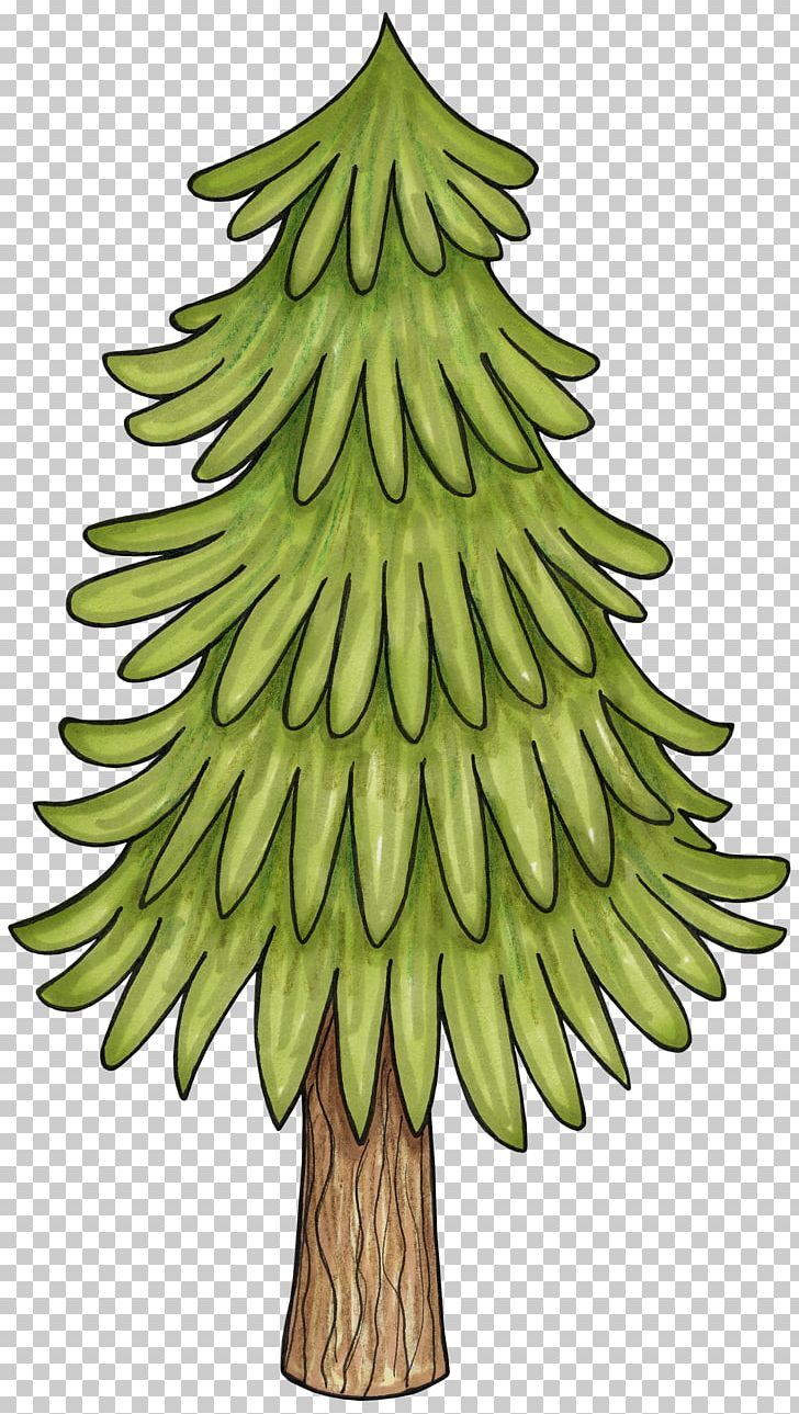 Pine tree woodland. Branch png clipart birch