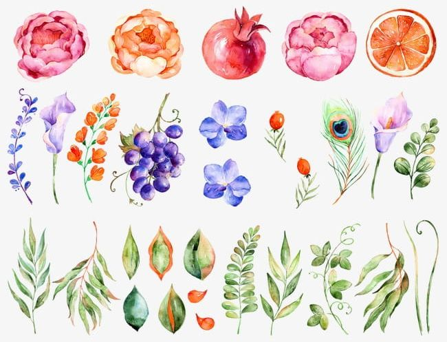 Watercolor Flowers PNG, Clipart, Flowers, Flowers Clipart, Grape, Leaf, Orange Free PNG Download