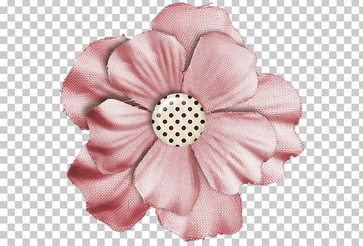 Cut Flowers Rose Family Pink M Petal PNG, Clipart, Cut Flowers, Flower, Flowering Plant, Peach, Peaches And Cream Free PNG Download
