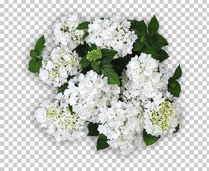 Hydrangea Cut Flowers Floral Design Flower Bouquet PNG, Clipart, Alisons, Alyssum, Annual Plant, Coco, Cornales Free PNG Download