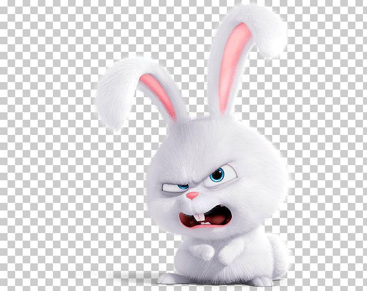 Dog Domestic Rabbit Gidget Lionhead Rabbit PNG, Clipart, Animals, Cat, Lionhead Rabbit, Material, Pet Free PNG Download