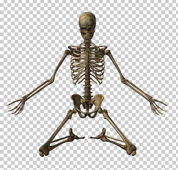 Human Skeleton Bone Skull PNG, Clipart, 3d Rendering