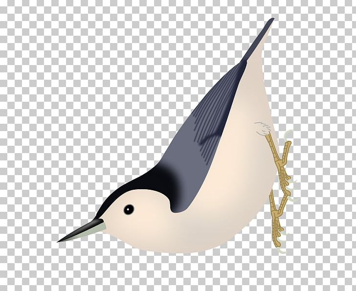 Duck Bird Algerian Nuthatch Eurasian Nuthatch PNG, Clipart, Algerian Nuthatch, Animals, Arctica, Aviculture, Beak Free PNG Download