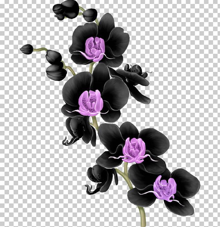 Moth Orchids Floral Design Flower Purple PNG, Clipart, Artificial Flower, Blume, Cari, Clip Art, Cut Flowers Free PNG Download