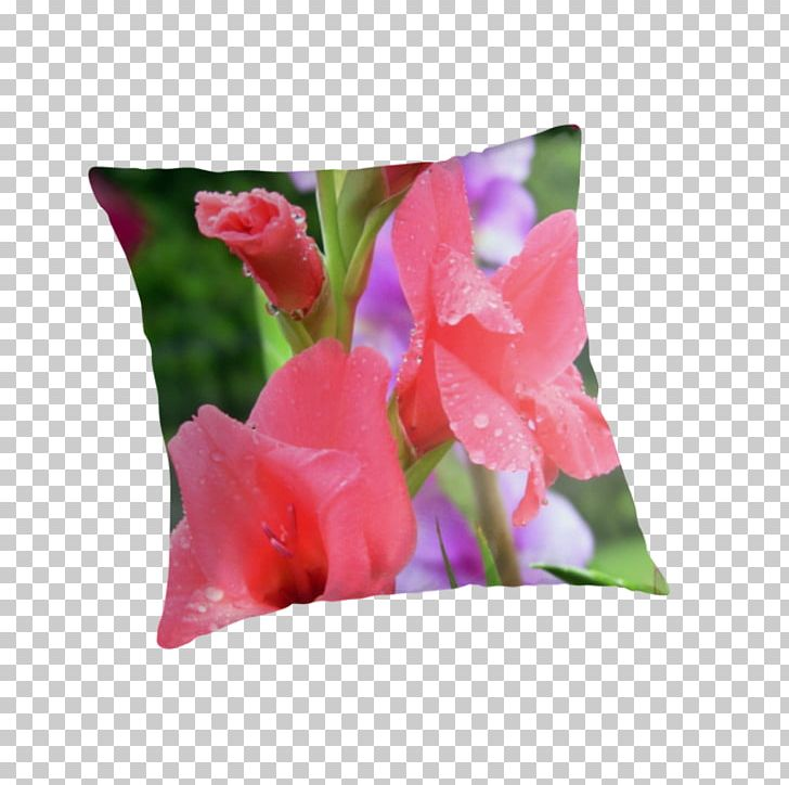 Gladiolus Throw Pillows Cushion Tulip PNG, Clipart, Cushion, Cut Flowers, Flower, Flowering Plant, Gladiolus Free PNG Download