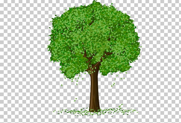 Spring Tree PNG, Clipart, Autumn, Autumn Tree, Branch, Cartoon, Christmas Tree Free PNG Download