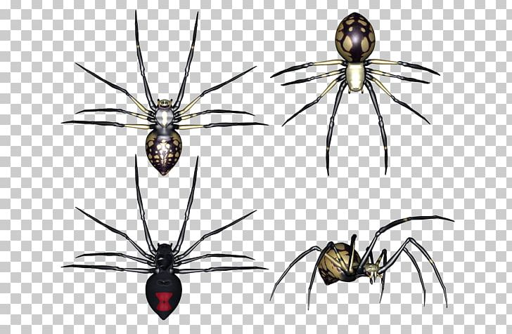 Spider barn. Arthropod png clipart angulate