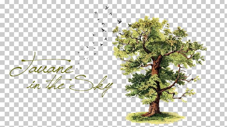 Genealogy Family Tree Png Clipart Branch Clip Art Conifer Desktop Wallpaper Drawing Free Png Download
