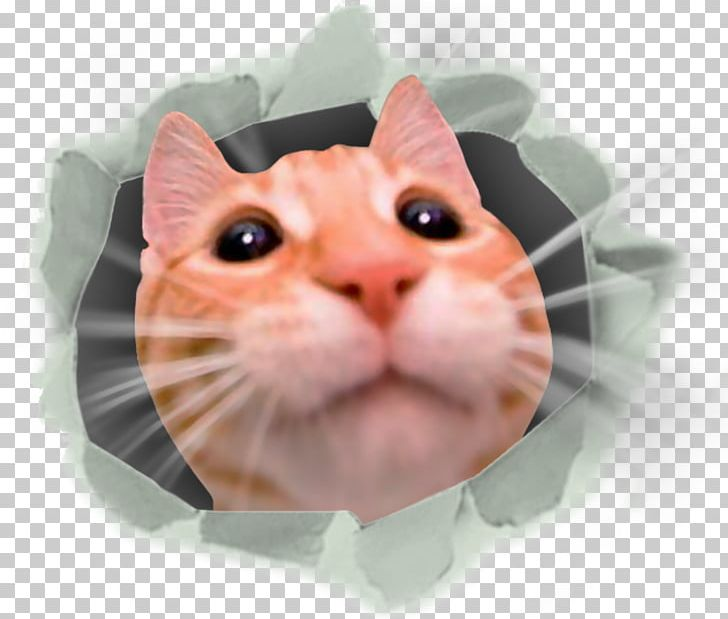 Feel CATS: Crash Arena Turbo Stars Dog Minecraft Computer