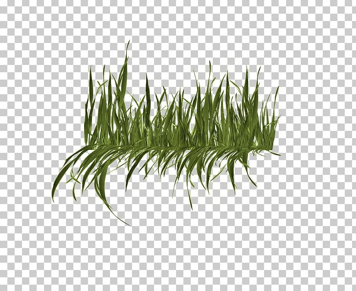 Image File Formats Leaf Others PNG, Clipart, Computer Icons, Desktop Wallpaper, Download, Grasses, Grass Family Free PNG Download