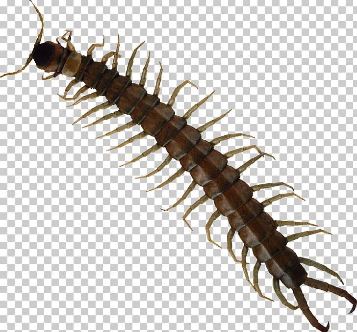 House millipede bite