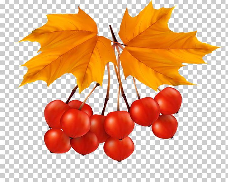Leaf Portable Network Graphics Autumn Leaves PNG, Clipart, Abscission, Autumn, Autumn Leaf Color, Autumn Leaves, Berry Free PNG Download