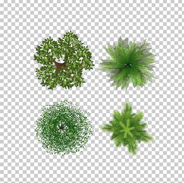 Tree PNG, Clipart, Grass, Green, Landscape Design, Leaf, Other Free PNG Download