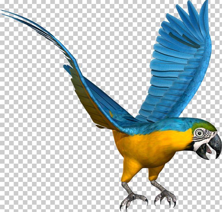 Budgerigar Macaw Lovebird Parrot PNG, Clipart, Animal Figure