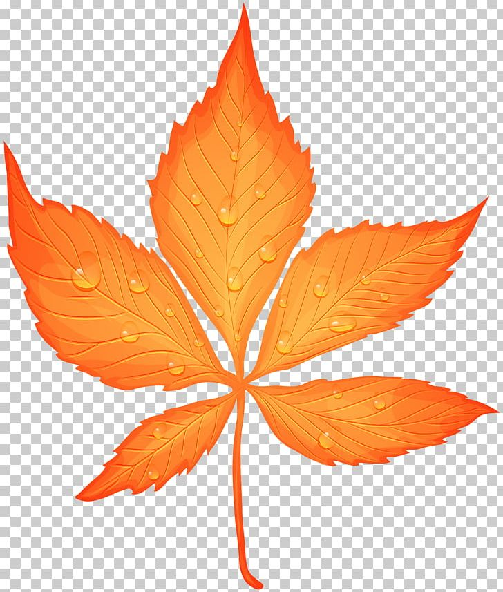 Autumn Leaf Color Yellow PNG, Clipart, Autumn, Autumn Leaf Color, Autumn Leaves, Color, Dew Free PNG Download