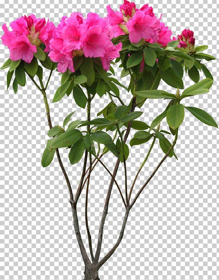 Flower PNG, Clipart, Azalea, Branch, Cut Flowers, Daffodils, Desktop Wallpaper Free PNG Download