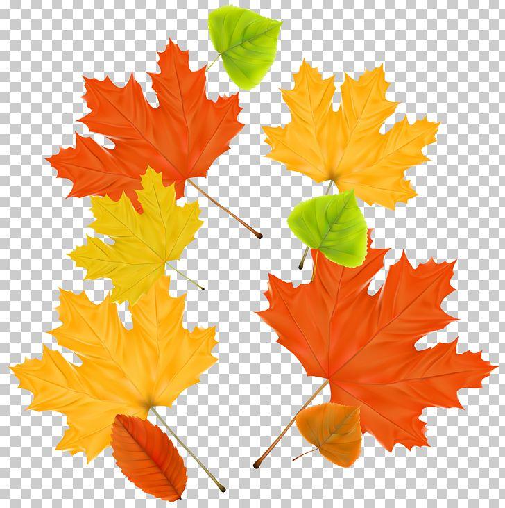 Autumn Leaf Color Maple PNG, Clipart, Autumn, Autumn Leaf Color, Autumn Leaves, Clipart, Color Free PNG Download