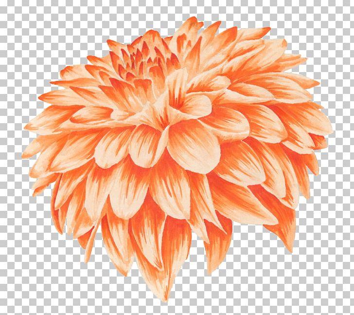 Orange Flower Chrysanthemum Yellow Watercolor Painting PNG, Clipart, Calendula Officinalis, Chrysanthemum, Chrysanths, Color, Dahlia Free PNG Download