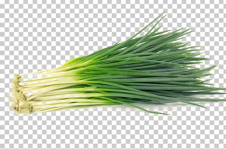 Allium Fistulosum Garlic Chives Shallot Vegetable PNG, Clipart, Allium, Allium Fis, Chives, Commodity, Condiment Free PNG Download