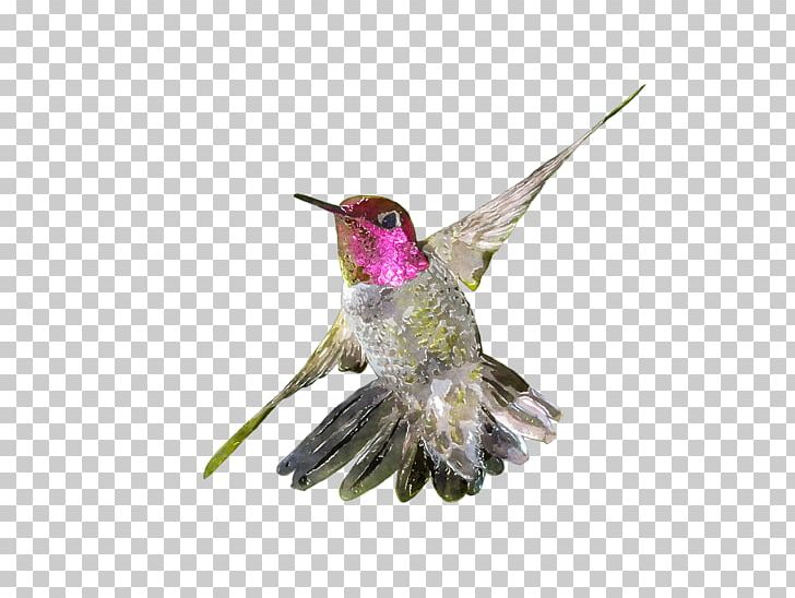 Hummingbird Watercolor Painting Drawing PNG, Clipart, Animals, Art, Beak, Bird, Clip Art Free PNG Download