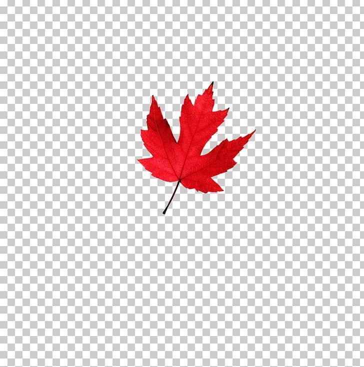 Autumn Leaves Autumn Leaf Color Maple Leaf PNG, Clipart, Autumn Leaf Color, Autumn Leaves, Color, Deciduous, Flowering Plant Free PNG Download