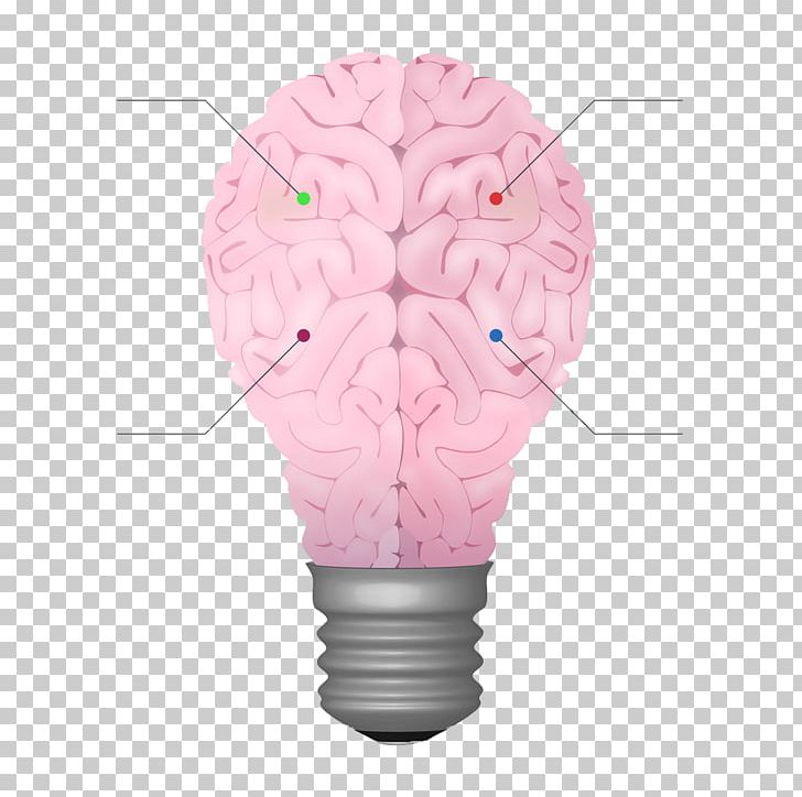 Brain Cerebrum Chart PNG, Clipart, Abstract Shapes, Agy, Brain, Bulb, Cerebrum Free PNG Download