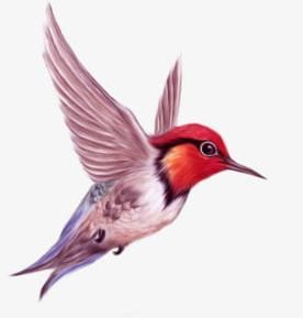Flying Bird Png Clipart Animal Bird Bird Clipart Bird Clipart Birds Free Png Download