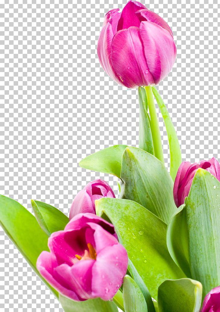 Desktop Flower Tulip PNG, Clipart, Bud, Cut Flowers, December 5 2016, Desktop Wallpaper, Download Free PNG Download