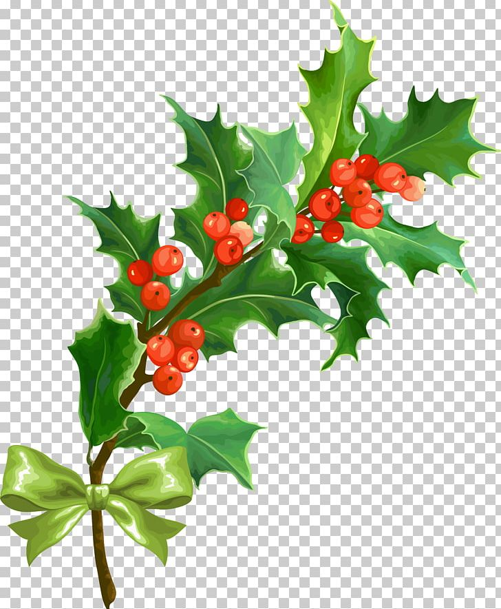 Christmas Holly Png.Christmas Holly Leaf Png Clipart Aquifoliaceae