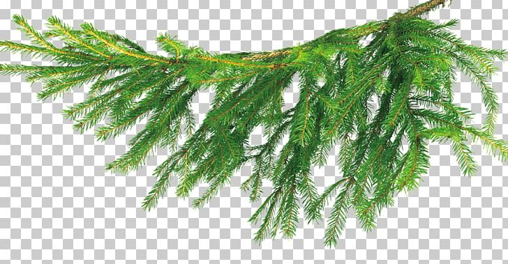 Christmas Branch Png.Christmas Tree Bychiha Branch Png Clipart Branch Branches