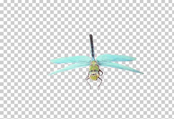 Insect Dragonfly Butterfly Png Clipart Abstract Arthropod